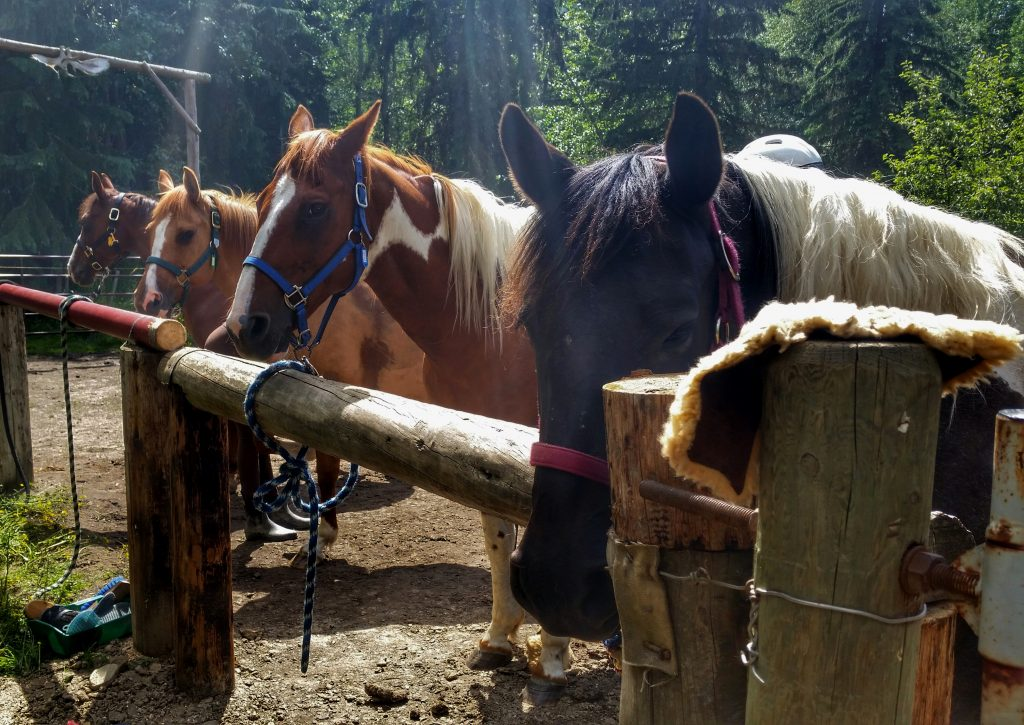 Horse boarding at Falling Star Ranch Academy of Foundational